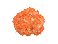 Hydrangea Tinted Orange