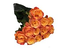 Orange Roses - 40 / 50 cm Pack 100