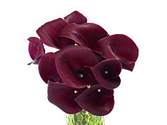 Mini Calla Lily Cranberry 50 cm