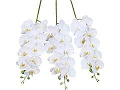Phalenopsis 9 Blooms +