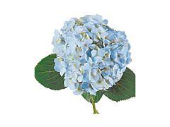 Hydrangeas Blue Select
