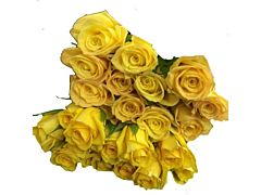 Yellow  Roses - 40 / 50 cm  Pack 100