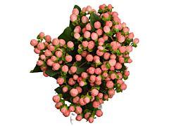 Hhypericum — pink