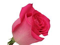 Hot Pink Rose Topaz