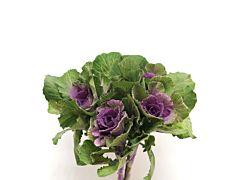 Kale - purple