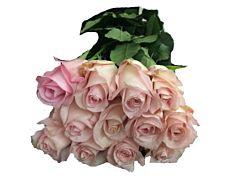 Light Pink Roses - 50 cm   Pack 100
