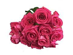 Hot Pink Roses - 50 cm Pack 100