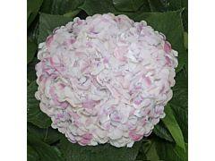 Hydrangea Pink Antique