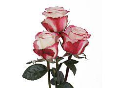 Pink Rose Sweetness