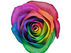 Rainbow Tinted Roses