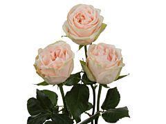 Garden Rose Wedding Spirit