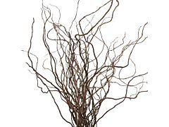 Curly Willow Medium