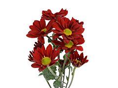daisy poms — red managua
