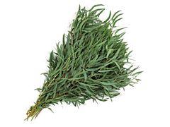 Eucalyptus Willow