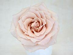 Garden Rose Brides Maid