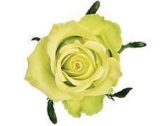 Green rose Jade