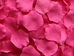 Rose Petals Hot Pink - 2000 petals