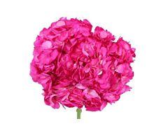 Hydrangeas Hot pink