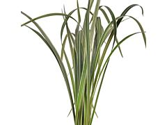 Lily Grass Green