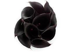 Mini Calla Lily Black 50 cm