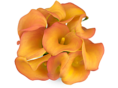 Mini Calla Lily Orange Mango 50 cm