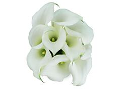 Mini Calla Lily White 50 cm