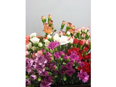 Mini Carnations Assorted