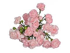 Mini Carnation Light Pink