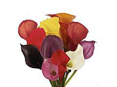Mini Calla Lily Assorted 50 cm