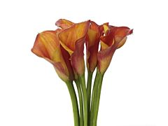 Mini Calla Lily Bi Color Orange 50 cm