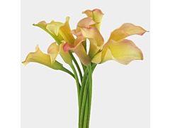 Mini Calla Lily Peach 50 cm