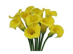 Mini Calla Lily Yellow 50 cm