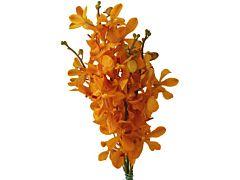 Mokara Orange