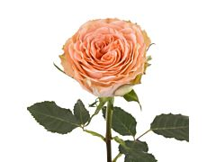 Garden Rose Country Home