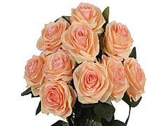 Peach Roses - 40 / 50 cm  Pack 100