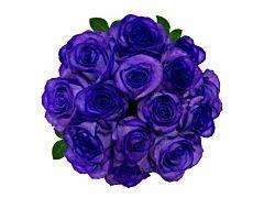 Purple Tinted Roses