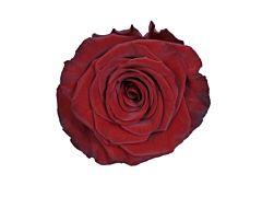 Red Rose Red Paris