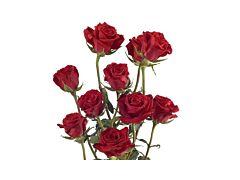 Spray Rose Red Mikado
