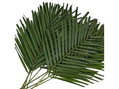 Robelini Palm