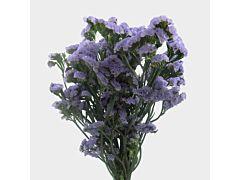 Statice — lavender