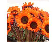 Sunflowers orange dyed