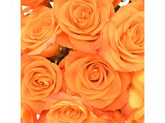 Sweetheart Roses Orange