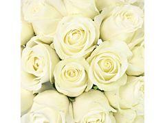 Sweetheart Roses White