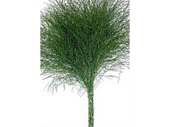 Tree ferm