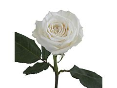 Garden Rose Playa Blanca